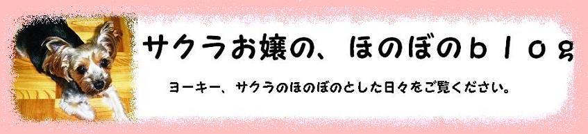 サクラお嬢の、ほのぼのblog。2.JPG